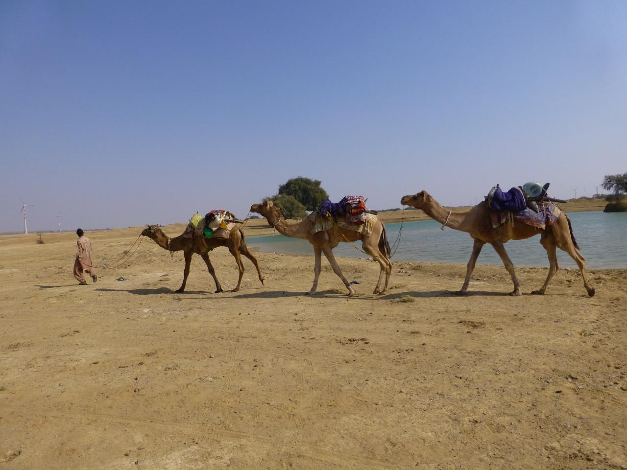 Jaisalmer: Hondenbeet bederft kameelsafariniet