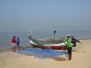 De vangst wordt uit de netten gehaald