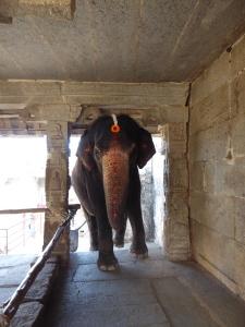 Tempelolifant Lakshmi zat me achterna.